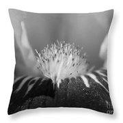 Miniature Tall Bearded Iris Named Consummation Throw Pillow
