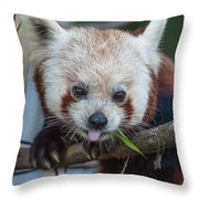 Mischievious Red Panda Throw Pillow