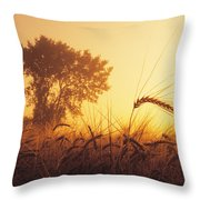 Mist In A Barley Field At Sunset Throw Pillow