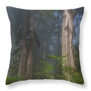 Mists Rising From Lady Bird Johnson Grove Throw Pillow