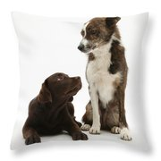 Mixed Breed And Chocolate Lab Throw Pillow