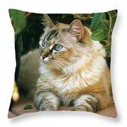 Mixed Breed Cat--mia Throw Pillow