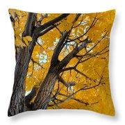 Moab Color Splash Throw Pillow