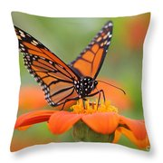 Monarch Butterfly Macro Throw Pillow