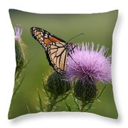 Monarch Butterfly On Bull Thistle Wildflowers Throw Pillow