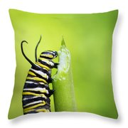 Monarch Caterpillar  Throw Pillow
