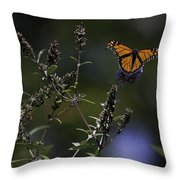 Monarch In Morning Light Throw Pillow