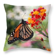 Monarch On Butterfly Weed Throw Pillow