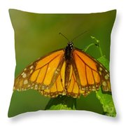 Monarch On Hackberry Throw Pillow