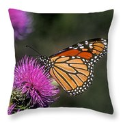 Monarch On Thistle 13f Throw Pillow