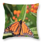 Monarch Sipping Throw Pillow