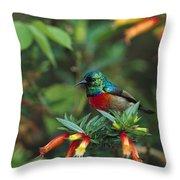 Montane Double-collared Sunbird Throw Pillow