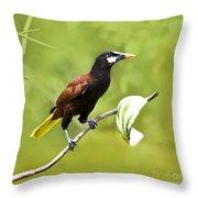 Montezuma Oropendula - Dp Throw Pillow