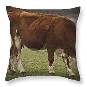 Moo Moo Cow Throw Pillow