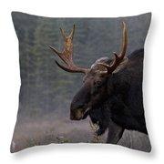 Moose, Algonquin Provincial Park Throw Pillow