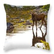Moose Baby 2 Throw Pillow