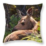 Moose Baby 5 Throw Pillow