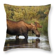 Moose Drinking In A Pond, Tombstone Throw Pillow