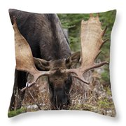 Moose. Male Feeding In A Forested Area Throw Pillow