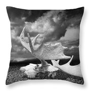 Moose Skull On Parched Earth Throw Pillow