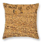 More Sheep To Count To Go To Sleep Throw Pillow