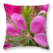 Morning Dew On Pink Cleome Throw Pillow