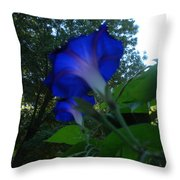 Morning Glory 01 Throw Pillow