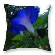 Morning Glory 02 Throw Pillow