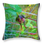 Morning Glory Beginning Throw Pillow