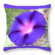 Morning Glory Fire Throw Pillow