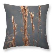 Morning Sunshine On Tall Reeds Throw Pillow