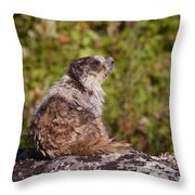 Morning Warmth Throw Pillow