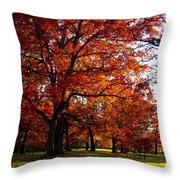 Morton Arboretum In Colorful Fall Throw Pillow by Paul Ge