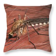 Mosquito Biting A Human Throw Pillow