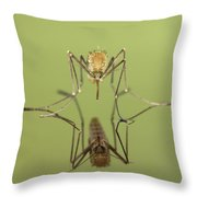 Mosquito Culicidae Freshly Hatched Throw Pillow