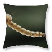 Mosquito Larva Throw Pillow