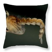 Mosquito Pupa Throw Pillow