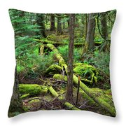 Moss And Fallen Trees In The Rainforest Of The Pacific Northwest Throw Pillow