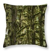 Moss Covered Trees, Hoh Rainforest Throw Pillow