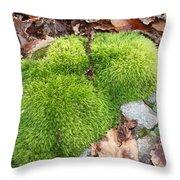 Moss On A Rock Throw Pillow