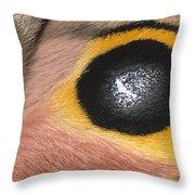 Moth Automeris Zozine Detail Of False Throw Pillow