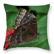 Moth I 2403 Throw Pillow