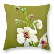 Moth Mullein Throw Pillow