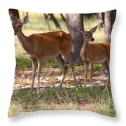 Mother And Yearling Deer Throw Pillow