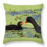Mother Common Gallinule Feeding Baby Chick Throw Pillow