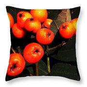Mountain Ash Berries Throw Pillow
