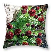 Mountain Blooms Throw Pillow