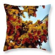 Mountain Bluebird Sialia Currucoides Throw Pillow