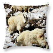 Mountain Goat Trio Throw Pillow
