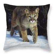 Mountain Lion Felis Concolor Idaho, Usa Throw Pillow